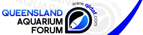 QLD Aquarium Forum