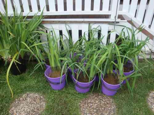 30-Plants-01.jpg