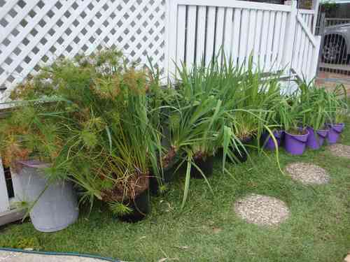30-Plants-02.jpg