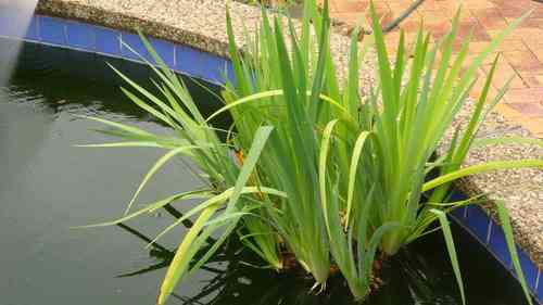 30-plant-a.jpg