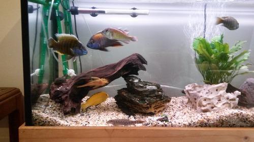 8 fish.jpg