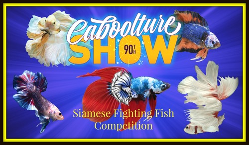 CabooltureShow90thPoster.jpg