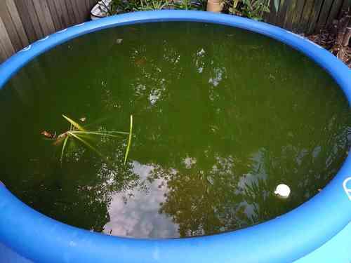 Pond01.thumb.jpg.5b46662b7d98e4f6459021369481e8bb.jpg