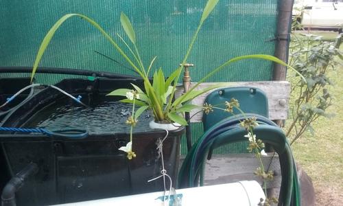 Water Plant.jpg