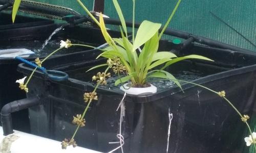 Water Plant 1 (1).jpg