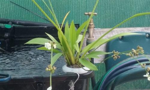 Water Plant 2.jpg