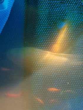 AQ-36-59.thumb.jpg.f90e76844c48fa858a08785921b7cdab.jpg