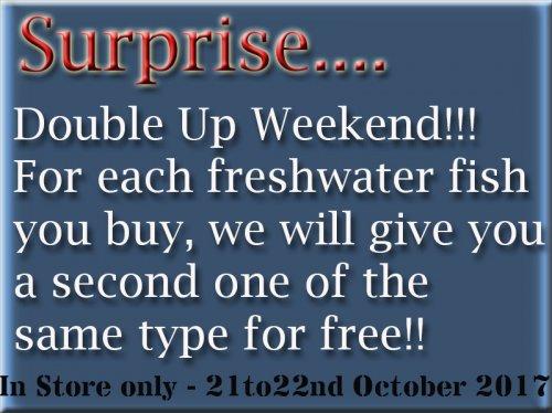 Buy-on-Get-one!!.jpg