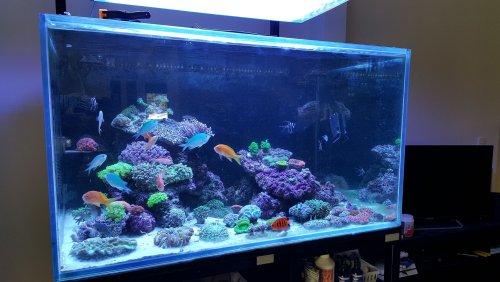 4x3x2 reef.jpg