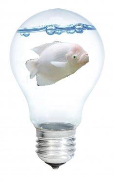 goldfish3.thumb.jpg.c9a59183254de05b00d86cdbebbc4a6f.jpg