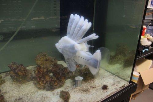 robofish-1561059305.thumb.jpg.ebf399027f3cea0fb52d276367ee6273.jpg