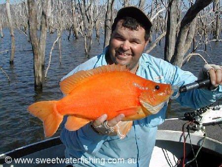 orange sooty.jpg