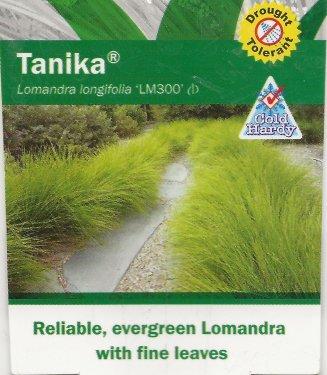 Lomandra-05.thumb.jpg.818ba39302f79f54f90ae5002308d2e4.jpg