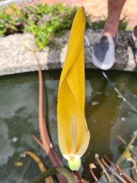 EE-flower-030.thumb.jpg.fe81360d795309f90b3661a95f432862.jpg