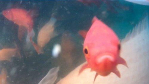 Goldfish01.thumb.jpg.521e957d1298a0a0cd9d548ef3729ffd.jpg